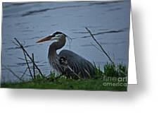 Heron At The Rock River Greeting Card