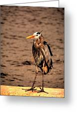 Egret Bad Feather Day Greeting Card