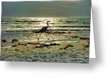 Heron Beachwalk Greeting Card