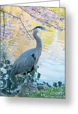 Heron - Beacon Hill Park Greeting Card
