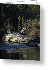 Heron By A Stream Greeting Card