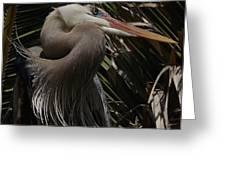 Heron Close-up Greeting Card