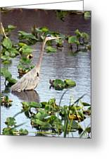 Heron Fishing In The Everglades Greeting Card