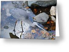 Heron Fishing Photograph Greeting Card by Don  Wright