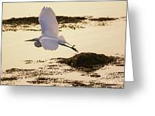 Heron Fly-by Greeting Card