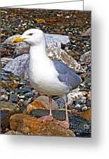 Heron Gull Greeting Card