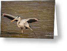 Heron - Hokey Pokey Greeting Card