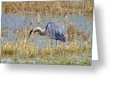 Heron Hunting In Shallows Greeting Card