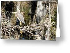 Heron In Everglades Greeting Card