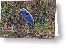 Heron In Marshes Greeting Card