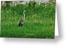 Heron In The Grasses Greeting Card