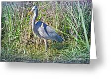 Heron In The Wetlands Greeting Card