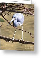 Heron On Branch Greeting Card