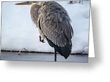 Heron On Ice Greeting Card