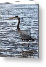 Heron On  Lake Guntersville Greeting Card