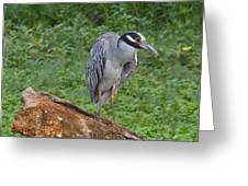 Heron On Log Greeting Card