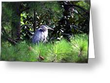 Heron On Pinetree Greeting Card