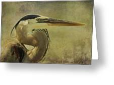 Heron On Texture Greeting Card by Deborah Benoit