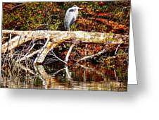 Heron Perch Greeting Card