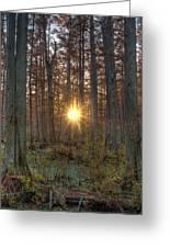Heron Pond Sunrise Greeting Card by Steve Gadomski