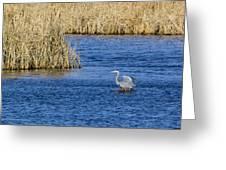 Heron Preening Greeting Card