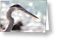 Heron Searching Greeting Card