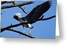 Heron Spreads Wings Greeting Card