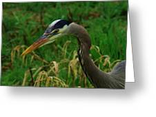 Heron Stare Down Greeting Card