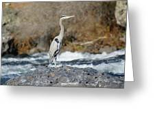Heron The Rock Greeting Card