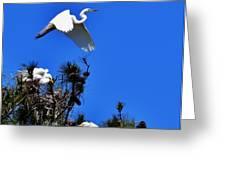 Heron Trio Greeting Card