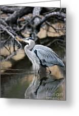 Heron Wading Greeting Card
