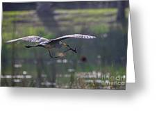 Heron With Nesting Material Greeting Card