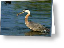 Herons Catch Greeting Card