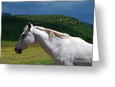 Hero's Horse-colorful Background Greeting Card