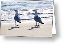Herring Gulls On The Beach Greeting Card