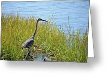Herron In The Grasses Greeting Card