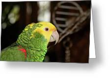 Hey Pretty Birdie Greeting Card