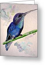 hHUMMINGBIRD 2   Greeting Card