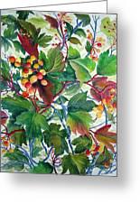 Hi-bush Cranberries Greeting Card