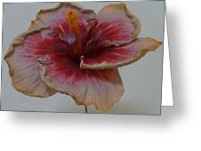 Hibiscus 3 Greeting Card