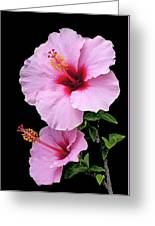 Hibiscus 7 V1 Greeting Card