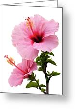 Hibiscus 7 V2 Greeting Card