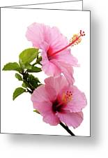 Hibiscus 7 V3 Greeting Card