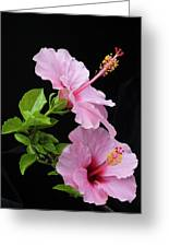 Hibiscus 7 V4 Greeting Card