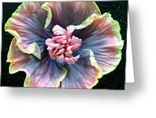 Hibiscus 9 Greeting Card