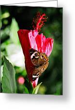 Hibiscus Aflutter Greeting Card