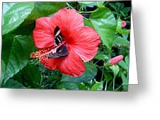 Hibiscus And Butterfly Diners Greeting Card
