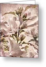 Hibiscus Apagado Greeting Card