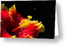 Hibiscus Bloom 3 Greeting Card