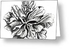 Hibiscus Bloom Greeting Card